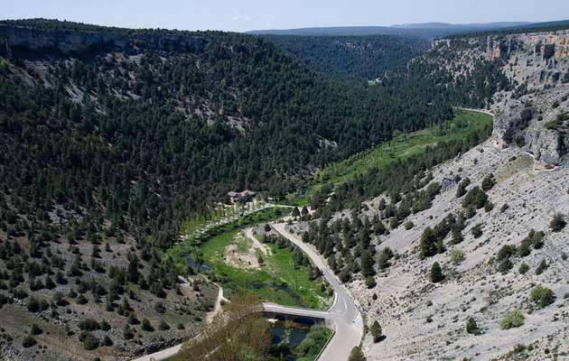 Bosques en Soria. Cañón del Río Lobos