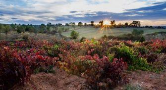 Visita y Cata Ribera del Duero - Kirios de Adrada