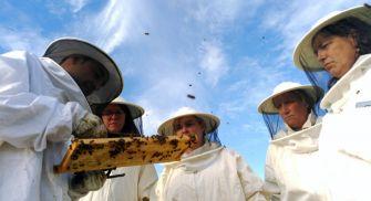 Actividad apicultor - Valladolid