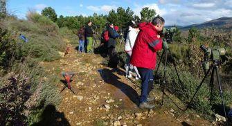 Observación del Lobo Iberico - Aherca