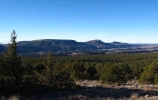 Sabinar más extensos y mejor conservados del planeta