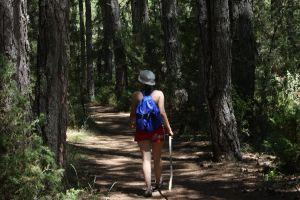 Senderismo, Micología y rutas en bicicleta en el Cañón del Río Lobos - La Estación del Río Lobos
