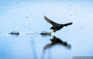 Aves en la Laguna Sentiz - Valdepolo