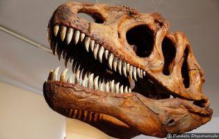 Museo Paleontológico - Salas de los Infantes