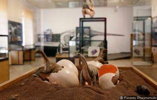 Museo de Dinosaurios - Salas de los Infantes