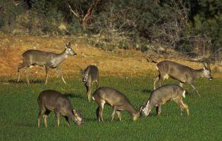 Fauna - Cañón del Río Lobos