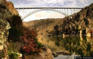 Puente - Pino de Oro