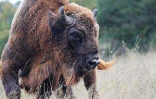 Reserva y Centro de Interpretación del Bisonte Europeo