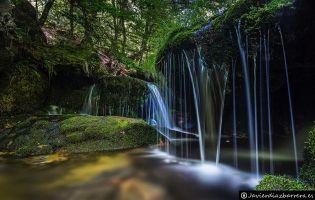 Bosque de Argovejo