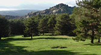 Ruta Guiada Pinares Llanos de Peguerinos