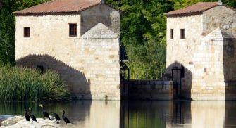 Ruta guiada observación de aves Zamora