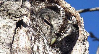Ruta ornitológica guiada en la ciudad de Zamora