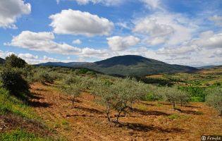 Ruta del vino Sierra de Salamanca