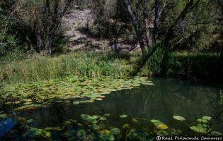Cañón del Río Lobos - Ucero