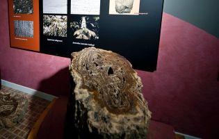 Los Árboles Fósiles de Hacinas