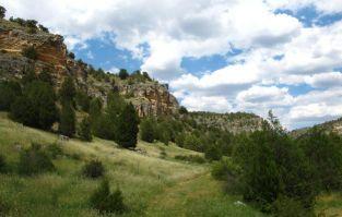 Buitre leonado - El Cañón de Valdehornos - Segovia