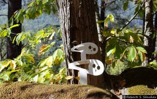 Camino Asentadero - Bosque de los Espejos