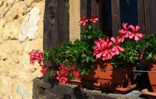 Detalle floral - Arquitectura popular - Calatañazor