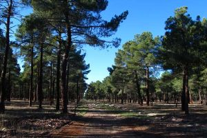 Tierra de Pinares Segovia - Entorno Casa Astarloa