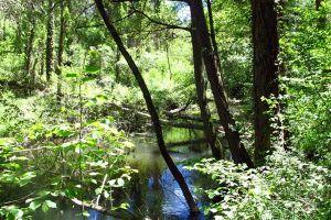 Paseos entorno natural río Cega - Casa Rural La Peñuela