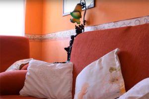 Dormir en Coca - Segovia