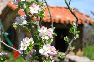 Mirador natural de la Sierra de la Demanda - Casa rural La Morera de Agustina