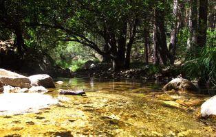 Río Cega - El Chorro de Navafría - Segovia