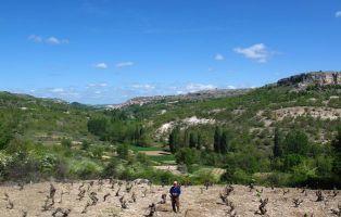 El camino de las viñas - Cuevas de Provanco