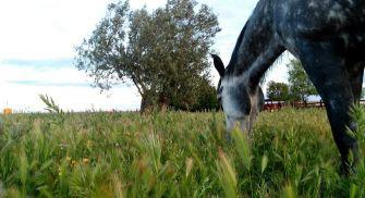 Rutas a caballo valladolid - Entre vinos y caballos