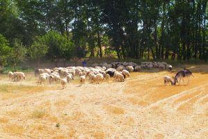 Casa rural en contacto con la naturaleza - Ribera del Duero