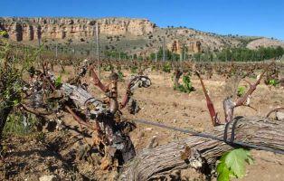 Viñedos D.O. Ribera del Duero - Hoces del Riaza