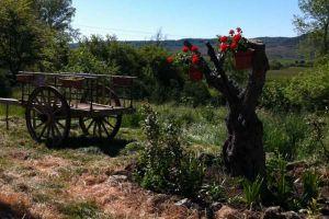 Carnes a la brasa, setas de temporada, productos ibéricos y repostería casera - Hotel rural La Pradera
