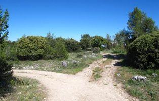 Senderismo Tierra de Pinares - Segovia