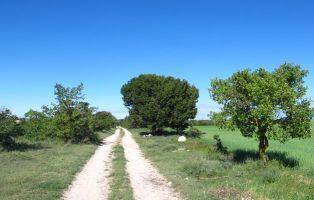 Senderismo Segovia - Tierra de Pinares