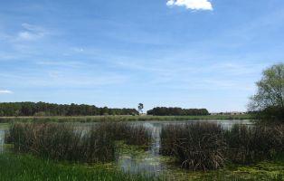 Laguna de Sotillos Bajeros - Cantalejo