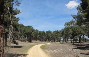 Recorrido entre pinares - Lagunas de Cantalejo