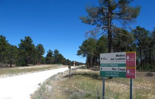 Pista forestal - Zarzuela del Pinar a Lastras de Cuéllar