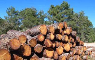 Aprovechamiento maderero - Tierra de Pinares