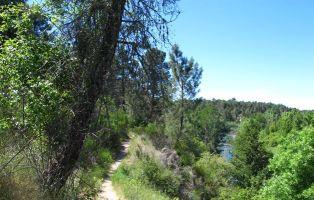 Vegetación de ribera - Río Cega - Tierra de Pinares