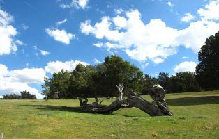 Sabinas milenarias de gruesos y retorcidos troncos - Santuario de Hornuez