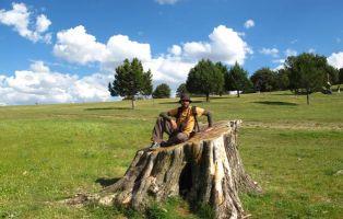 Tronco de la sabina 'La Borrega' - Moral de Hornuez - Segovia