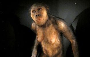 Figuras del MEH - Evolución Humana - Burgos