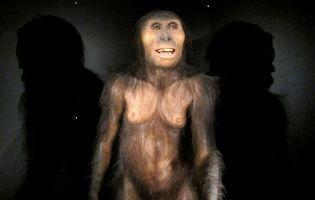 Lucy - Reproducción Museo de la Evolución Humana