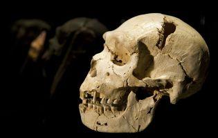 Cráneo nº 5 - Miguelón - Museo de la Evolución Humana
