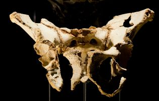 Fósiles originales Yacimientos de Atapuerca - MEH