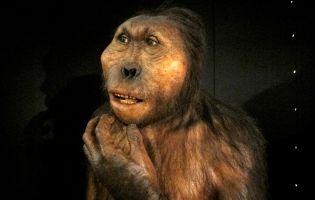Qué ver en Burgo - Museo de la Evolución Humana