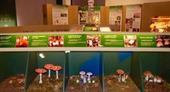 Centro de Interpretación de las Especies Micológicas - Rabanales