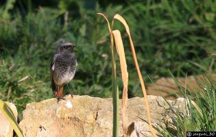 Cordel del Puerto de Candeleda - Ornitología