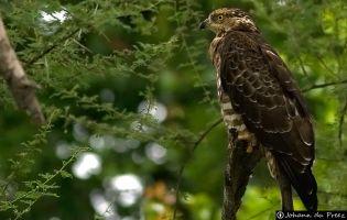Ruta Ornitológica Manzorreras