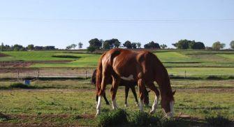 Equitación Ribera del Duero - La Galinda